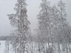 Nannestad Vinter 1
