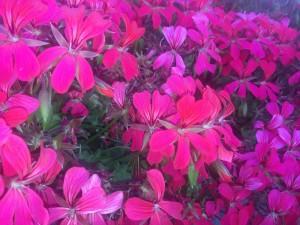 Sejlforeningen blomster