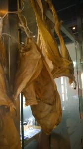 Skarven Arctandria Inde Tørfisk