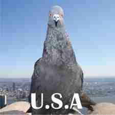 USA 225
